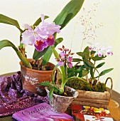 Orchid plants and books on wooden table