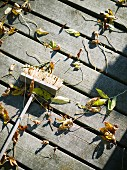 Autumn leaves on a jetty.
