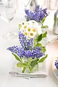 Posies of grape hyacinths and bellis