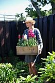 Woman in garden carrying wooden crate of flowering plants