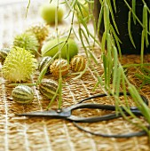 Garden scissors & exotic green fruits on raffia mat