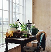Gardening utensils and geraniums on wooden table with worn top and old garden chair in front of window
