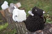 Knitted sheep tea cosies