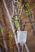 Glass Candle Holder Hanging from a Branch