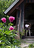 Pink peonies in front of wood-fired bread oven in hut and old besom broom