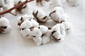 Wreath of cotton capsules