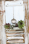 Succulents planted in old cutlery rack