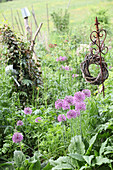 Allium flowers and ornamental garden stakes in wild garden