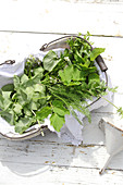 Wild herbs in basket