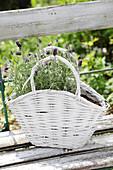Lavender in white basket on garden bench
