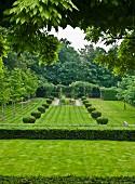 Angelegter Garten mit zwei Reihen Buchsbaumkugeln auf der Wiese