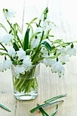 Glass of snowdrops (Galanthus nivalis)