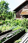 Cottage garden with cold frames and barn in background