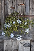 Nostalgic Christmas arrangement of ornate, white crocheted stars and branch of mistletoe on rustic, weathered wooden door