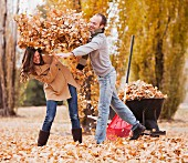 Caucasian couple raking autumn leaves