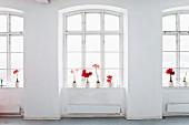 Potted amaryllis on window sills on loft-style interior