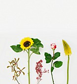 Orchid, sunflower, pepper berries, rose & red hot poker against white background