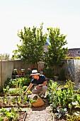 Man working in vegetable garden