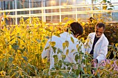 Scientists in greenhouse