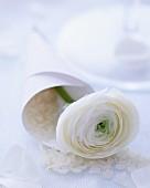 Papiertüte mit Reis und weisser Ranunkelblüte