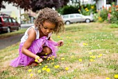 Little girl in purple tulle skirt picking dandelions