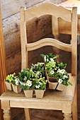 Seed pots of mistletoe and Star-of-Bethlehem flowers on kitchen chair