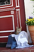 Cat lying in basket amongst clothing & hand-sewn T-shirt outside front door