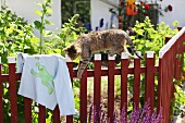 Cat climbing on wooden garden fence next to T-shirt with hand-sewn frog motif