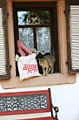 Cat next to cloth bag with hand-sewn animal motif in window niche