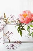 Pfingstrosenblüte & Blätterranke