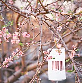 Tin can with barcode hanging amongst branches of fruit tree in blossom