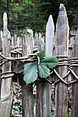 Chestnut leaf on old wooden fence