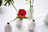 Anemone und Margerite in weissen Vasen