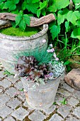 Miniature pond in old terracotta pot & autumn plant arrangement in zinc bucket