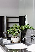 Grey bathroom with decorative jade plant on sink surround