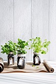 Kitchen herbs in handmade planters as gifts
