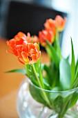Orangefarbene aufgeblühteTulpen in runder Glasvase