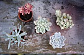 Various potted succulents (top view)