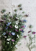 Bouquet of various varieties of Nigella lying on pale, rustic fabric