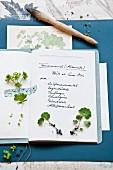 Handgeschriebenes Gartenbuch mit kleinen Alchemilla-Setzlingen