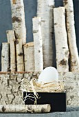 Egg lying on straw in black box; row of birch logs in background