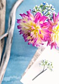 Posy of pink and yellow dahlias and weathered branches on pale blue surface