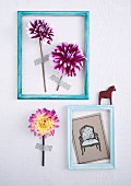 Two light blue picture frames containing dahlia flowers and grey postcard stuck to wall