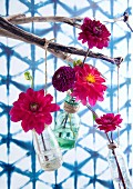 Dahlias in glass bottles suspended from weathered branch against wall with mesh pattern