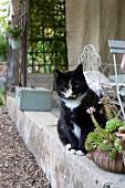 Katze auf niedriger Betonmauer vor Veranda
