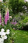 Fingerhut, Schmetterlingsstrauch und Rosen im Garten