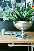 House plant in shiny silver goblet in front of family photos on black pinboard