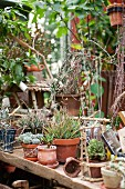 Potted succulents on rustic wooden surface