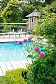 Flowering alliums in flowerbed in front of pool surrounded by wooden deck