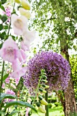 Flowering foxglove and allium